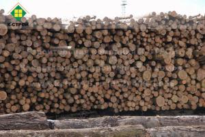 хвойная древесина велокс